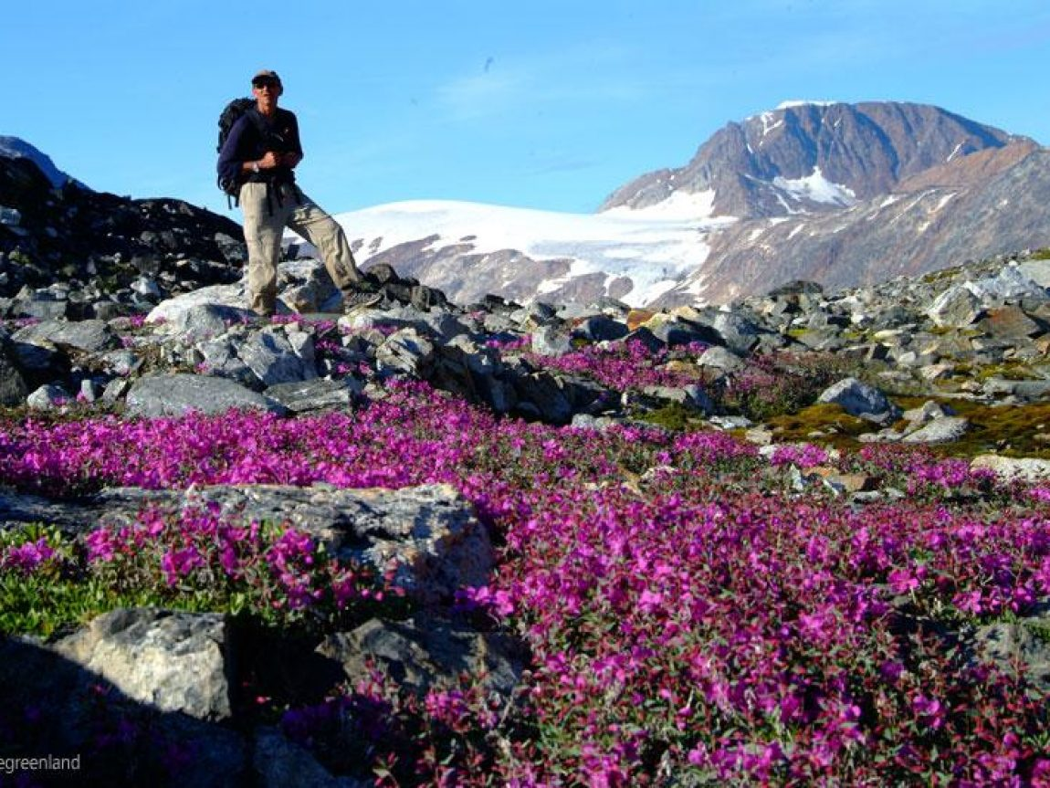 greenland i love greenland flowers