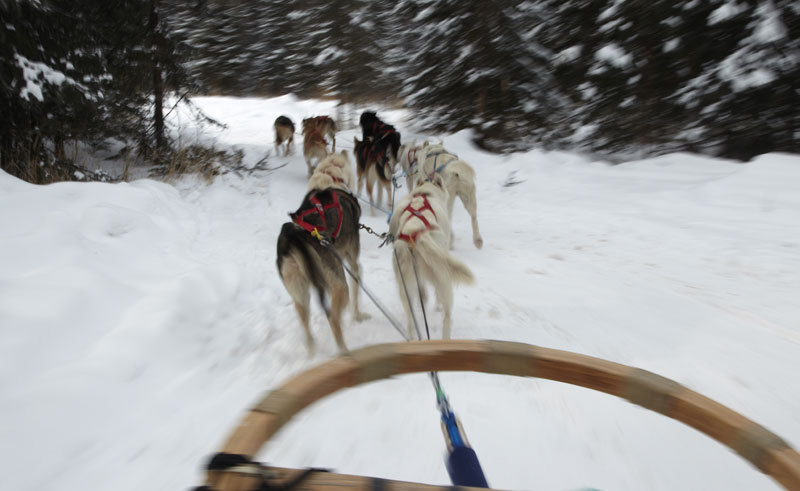 alaska chena dog sledding