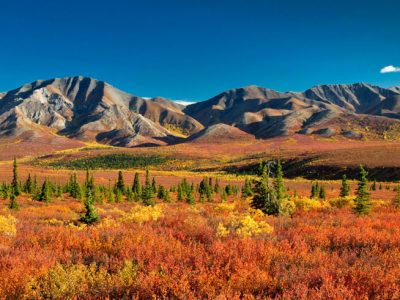 alaska denali national park autumn colours do