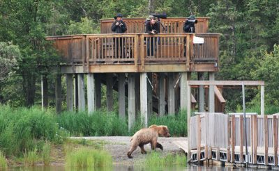 alaska katmai grizzlies brooks lodge nh