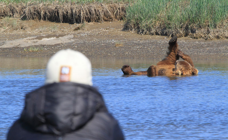 alaska katmai grizzlies viewing nh