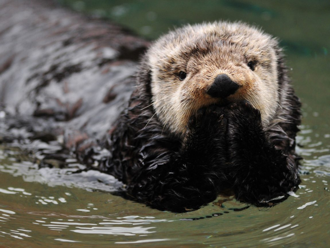 alaska wildlife sea otter doll