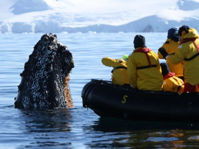 antarctica spyhopping whale and zodiac qe
