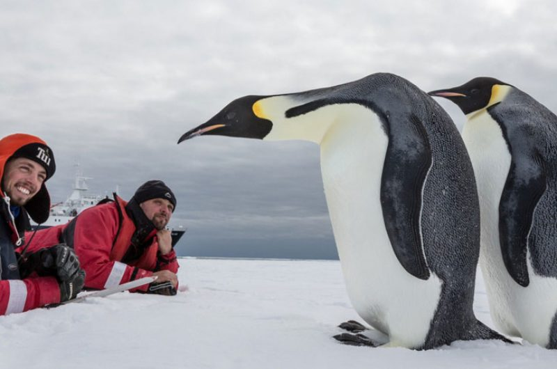antarctica up close with emperor penguins oc