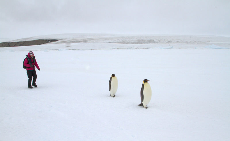 antarctica walking with emperor penguins oc