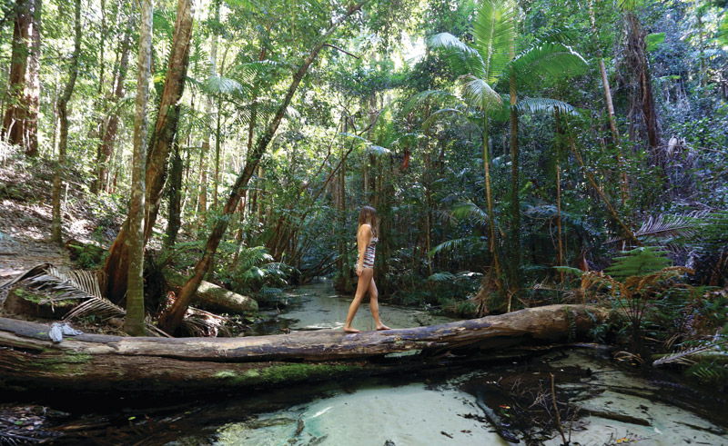 australia queensland daintree national park
