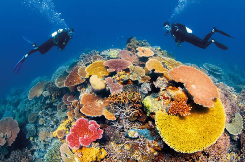 australia queensland great barrier reef coral divers ta