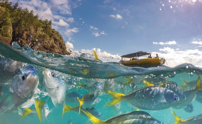australia queensland whitsunday snorkelling