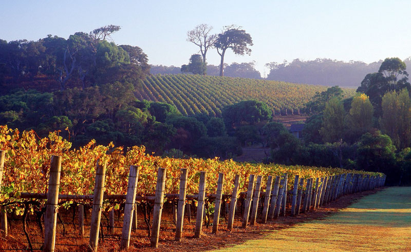 australia wa margaret river winery autumn ta