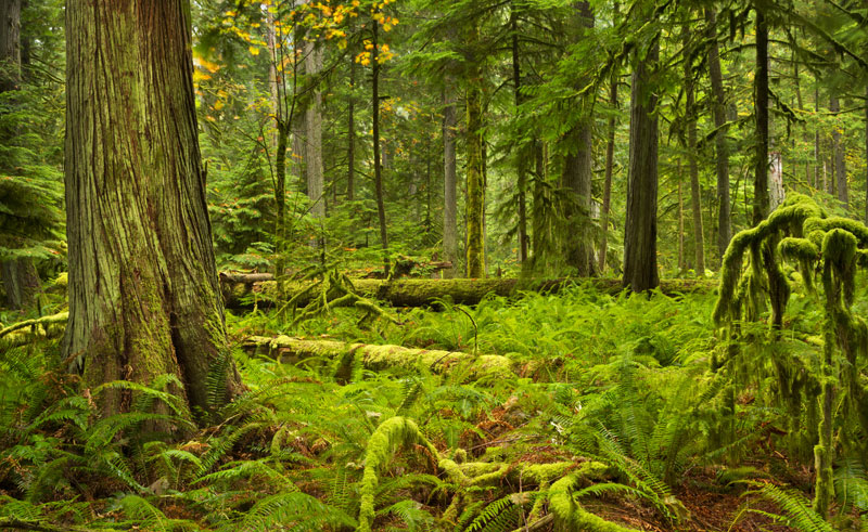 canada bc cathedral grove is