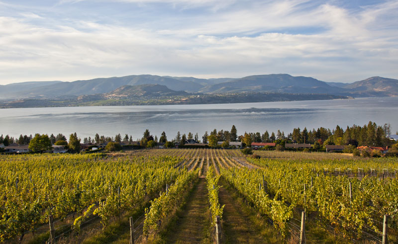 canada bc okanagan valley vineyards2 ctc