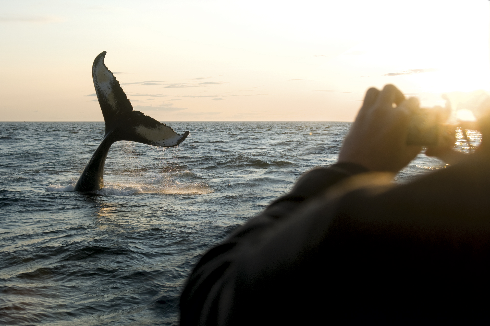 Whale watching from Brier Island