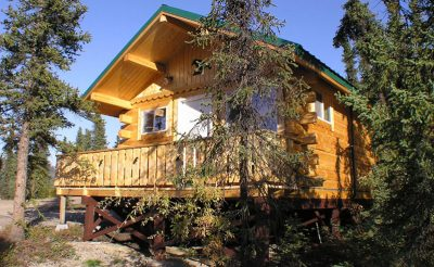 denali grizzly bear resort cabin
