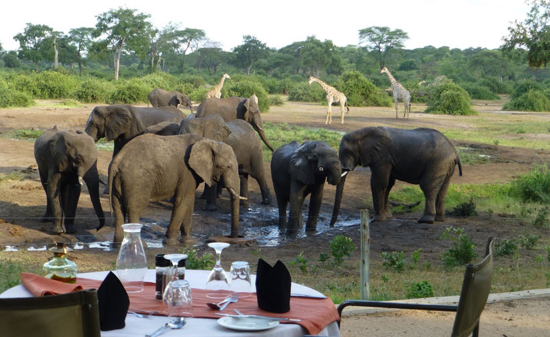 elephant valley lodge dining