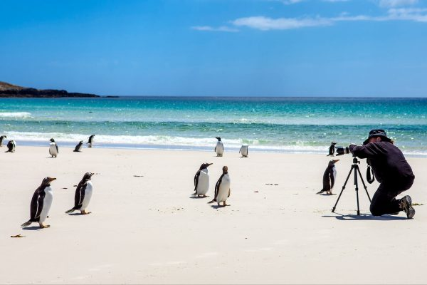 falklands gentoo photographer istk