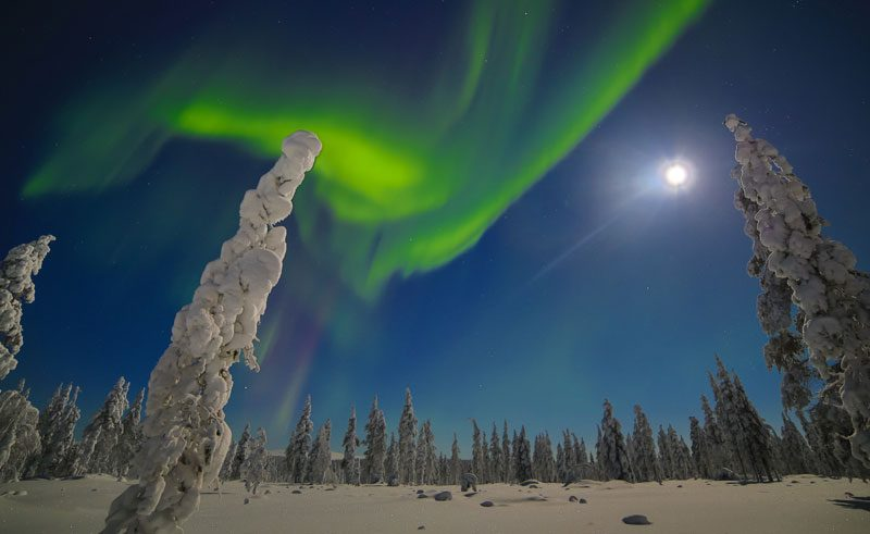 finland lapland muotka northern lights over fir trees2