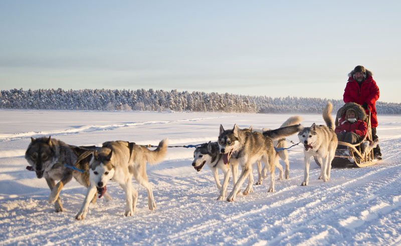 finnish lapland husky sledding from nellim