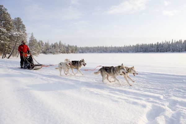 finnish lapland husky sledding vf