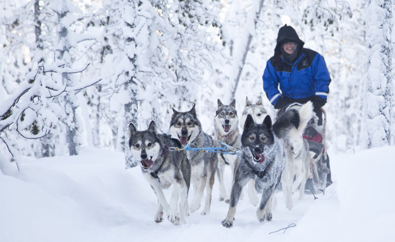 finnish lapland lake inari husky sledding nwh