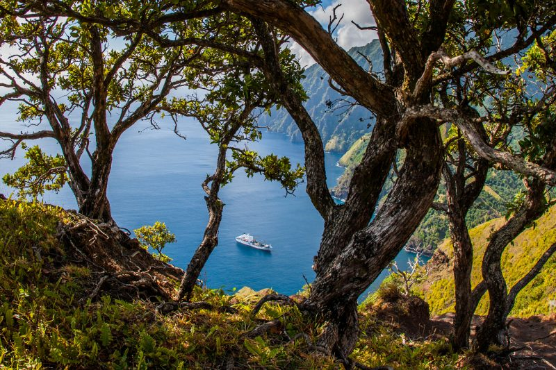french polynesia marquesas tree view aran