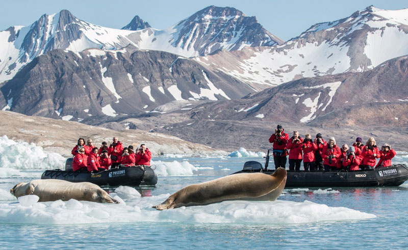 greenland zodiac excursion bearded seal2 pos