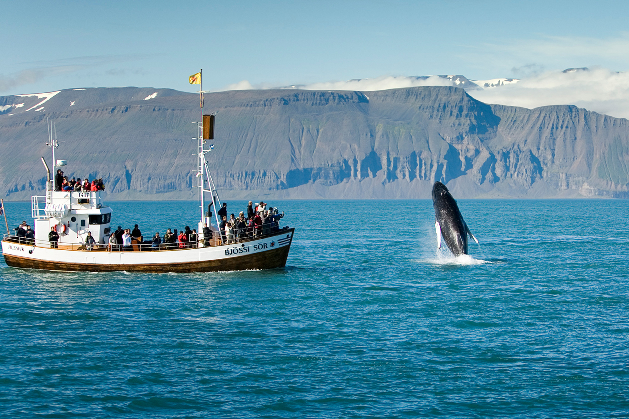 Whale Watching Iceland Holidays | Discover the World