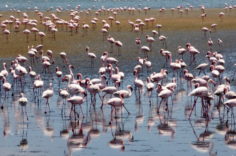namibia walvis bay lagoon flamingoes gt