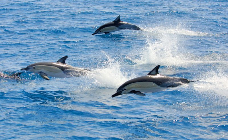 new zealand bay of plenty dolphins bopt