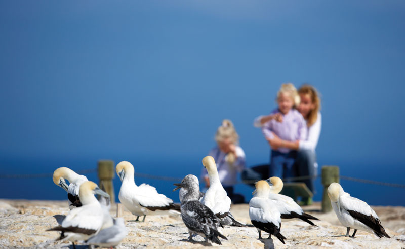 new zealand hawkes bay cape kidnappers gannets tnz