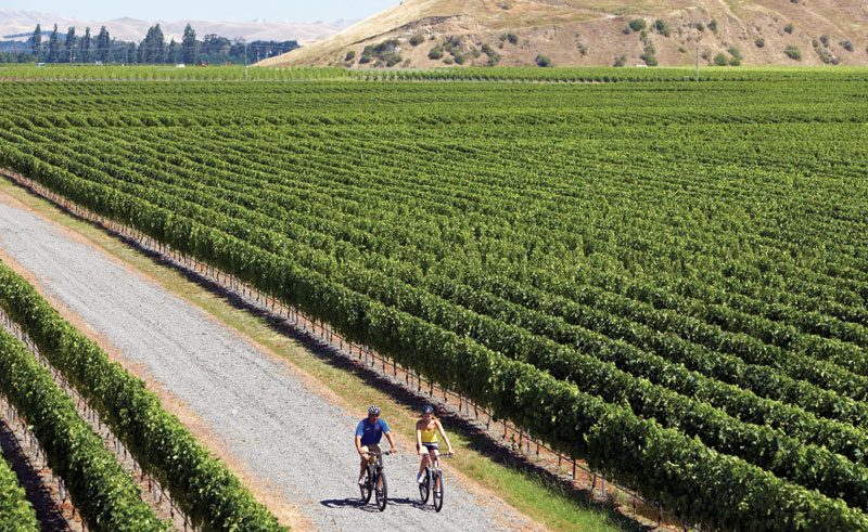 new zealand hawkes bay napier vineyard cycling tnz