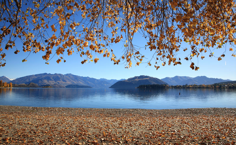 new zealand lake wanaka lakeshore autumn slt