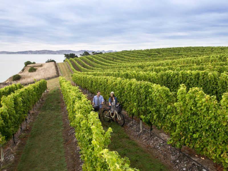 new zealand marlborough vineyard cycling