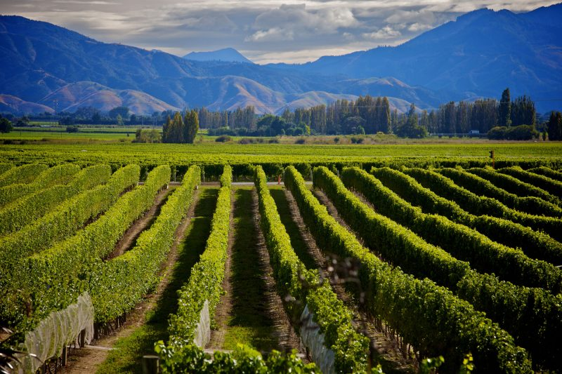 new zealand marlborough vineyard istk