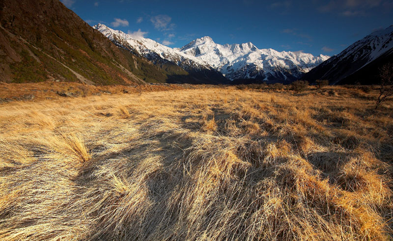 new zealand mt cook region tussock grass amc