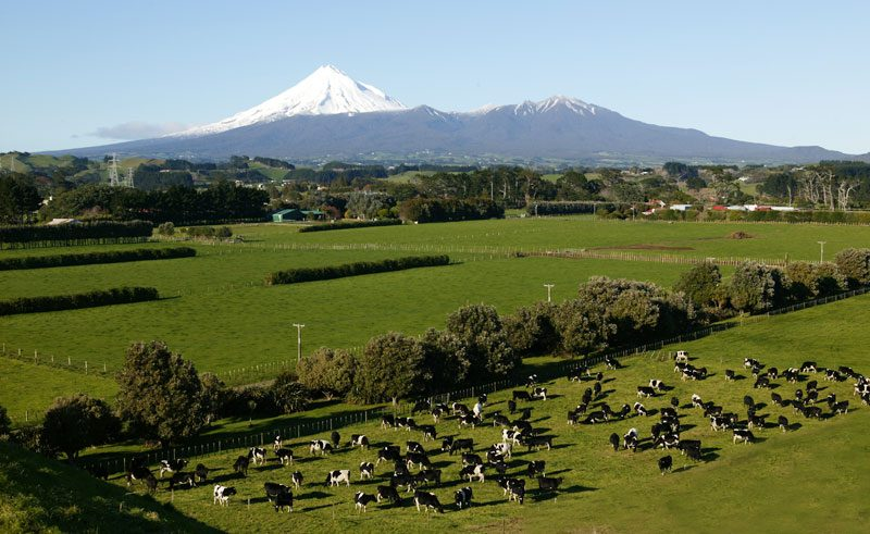 new zealand mt taranaki pastoral scenery vt