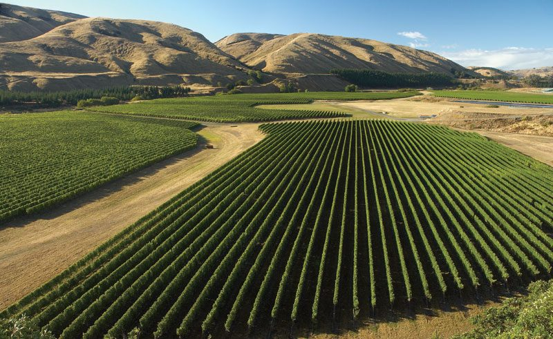 new zealand wairarapa martinborough vineyard tnz