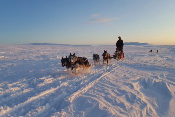 northern norway husky sledding holmen h