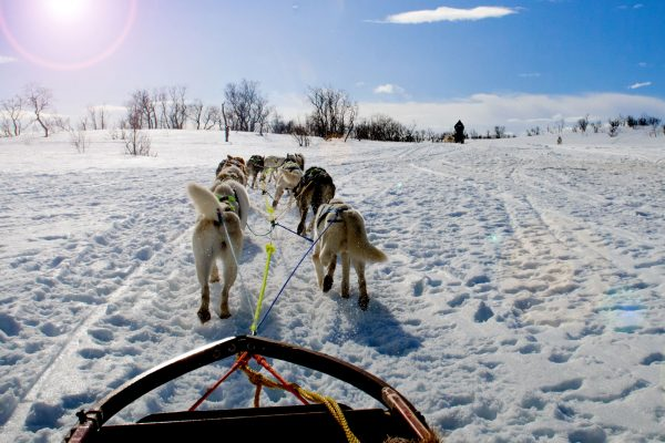 northern norway husky sledding pov adstk