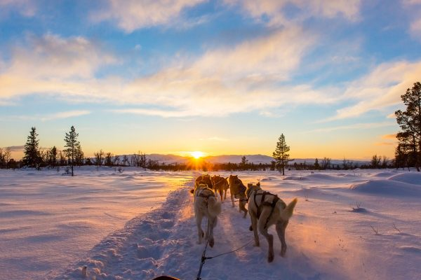 northern norway husky sledding sunset pov adstk
