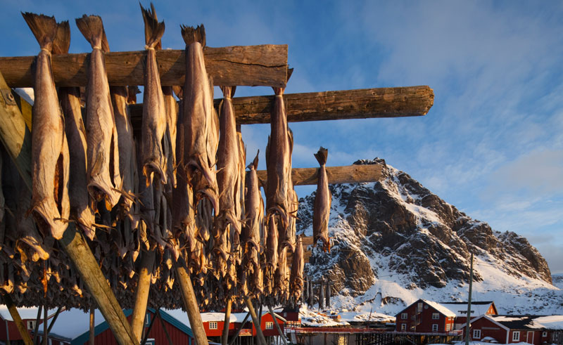 norway north dried fish is
