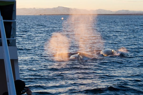 norway vesteralen andenes photographing humpbacks aws
