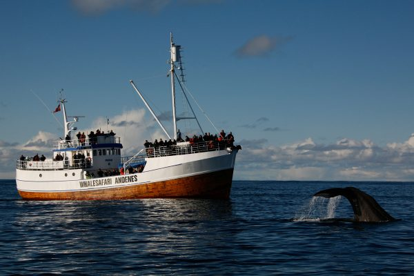 norway vesteralen andenes whale watching aws