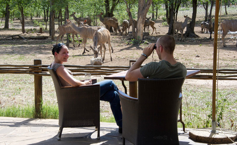 ongava tented camp chairs and animals