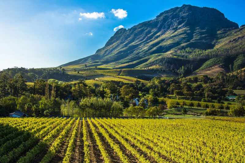 south africa cape winelands vineyard istk