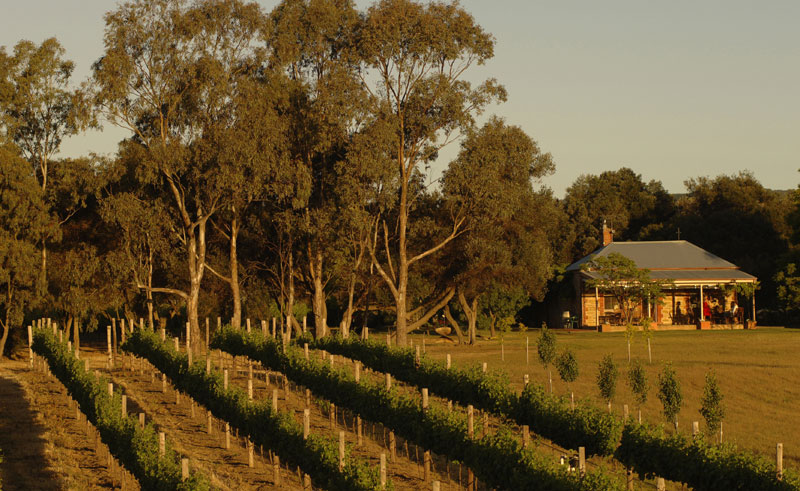 south australia barossa valley vineyard satc