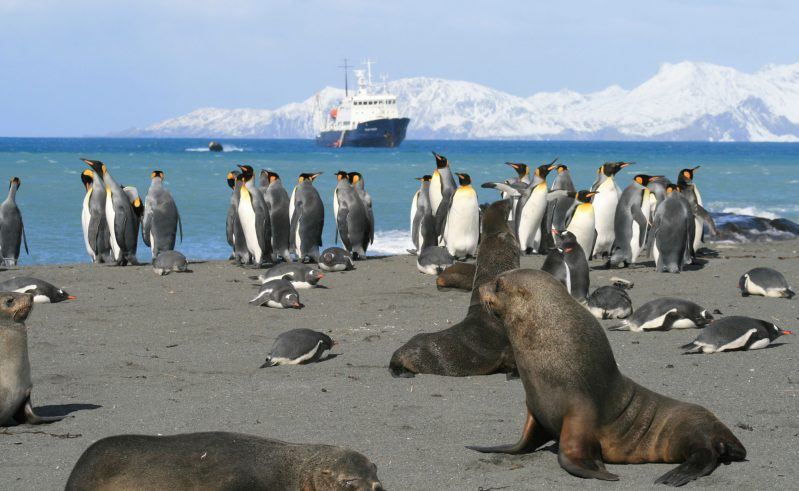 south georgia beach seals and penguins ae