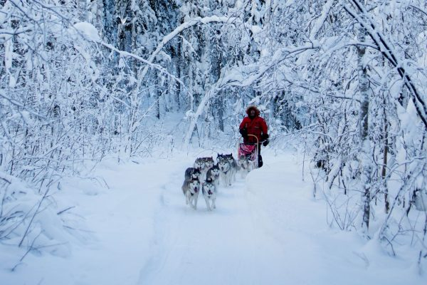 sweden lapland husky sledding forest vs
