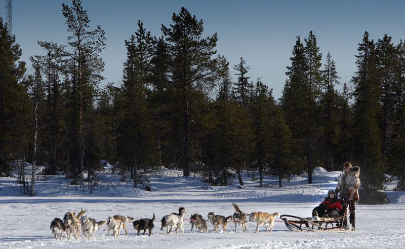 sweden lapland husky sledding team rth