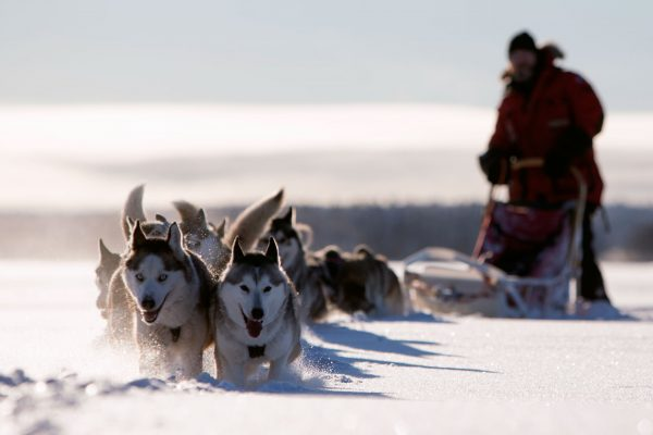 sweden lapland husky sledding vs