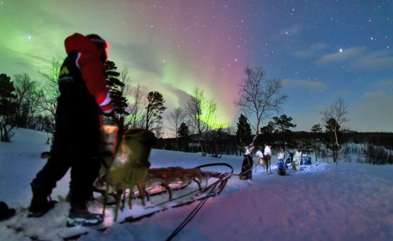 swedish lapland abisko aurora hunt by husky lm